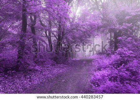 Purple magical leaves on forest path