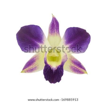 Purple orchid flower isolated on a white background.