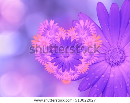 purple-pink  flowers,  on pink-blue blurred background .  Closeup.  Bright floral composition, card for the holiday.  collage of flowers. Nature.