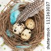 quail eggs in nest on a white for easter - stock photo