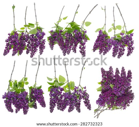 Qualitative big set of isolated  lilac  branches  for your spring collages. You can do frames   borders backgrounds  and so on.