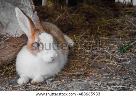 Rabbit was lying on a pile of hay the day.