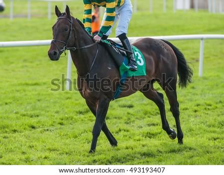 Jockey Horse Taking Lead Race Stock Photo 531205432 ...  Jockey Horse Ta...