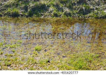 Rain puddle on green grass at a park