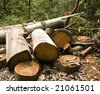 rainforest logging - stock photo