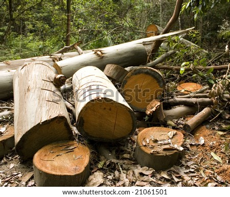 rainforest logging
