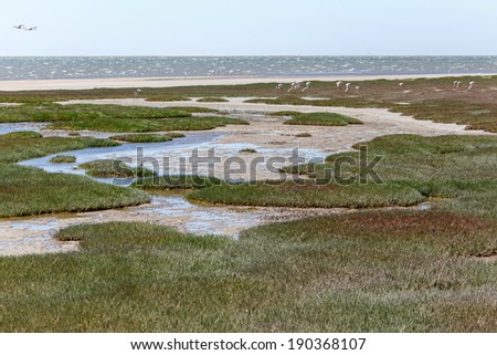 Ramsar Protected Area at Walvis Bay Lagoon, Namibia, Africa