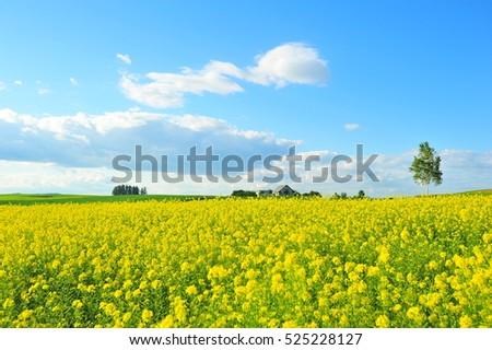 rapeseed flower clip art