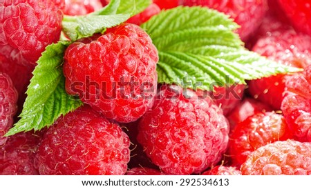 Raspberry berry close-up as a background.