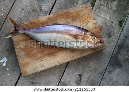 raw fish on a wooden background - Yellowtail -  Greater amberjack - gof