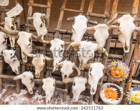 Real cow skulls with horns on rack for sale