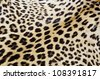 Real tiger fur closeup for background use - stock photo