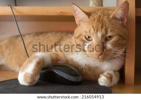 red cat holding computer mouse