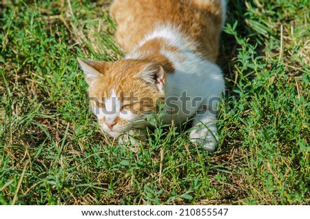 Red cat lying in the green grass, the instinct of a predator