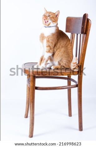 red cat sitting on wooden chair on white background