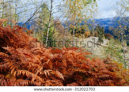 Red Fern in autumn forest. Beauty in nature. Seasonal landscape