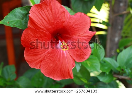 Red flower in Thailand summer season