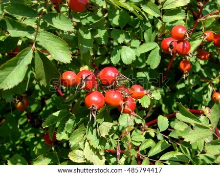 red fruit on green trees crab apples