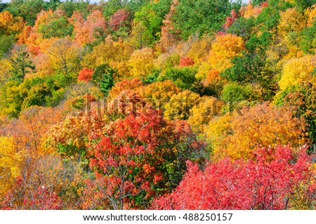 Red, green and yellow maple trees in fall