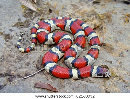 Matt Jeppson S Quot Non Venomous Snakes Quot Set On Shutterstock