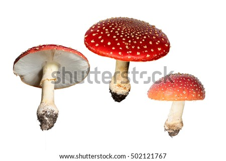 Red Mushrooms Isolated