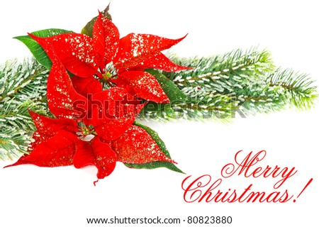 Red Poinsettia. Marry Christmas. Card Concept