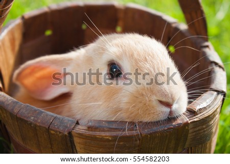 red rabbit sitting in the basket outdoor