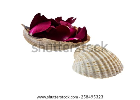 Red rose and scallops shell on white background