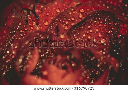 Red rose in water drops, shallow focus, vintage photo effect with paper texture.