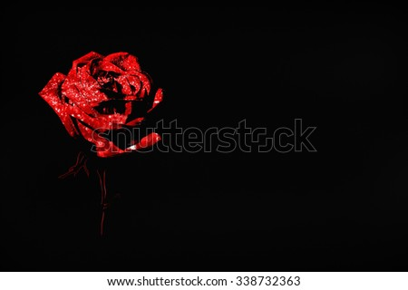red rose on a dark background