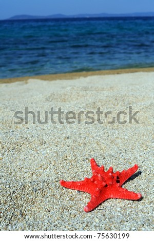 Red sea star on beach, Toroni, Greece
