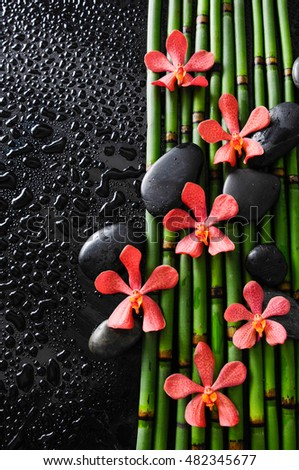 Red six orchid with stones on bamboo grove-wet background
