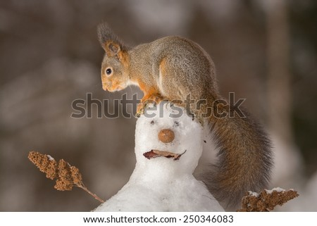 red squirrel standing on the head of a snowman