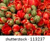 Red Tulips from Amsterdam - stock photo