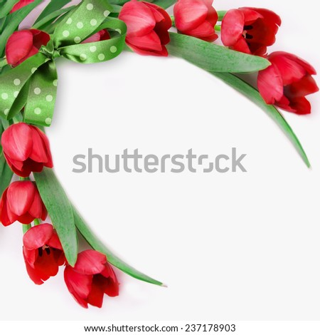 Red tulips on white.