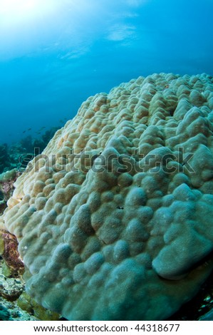 Reef, Indian Ocean, Maldives