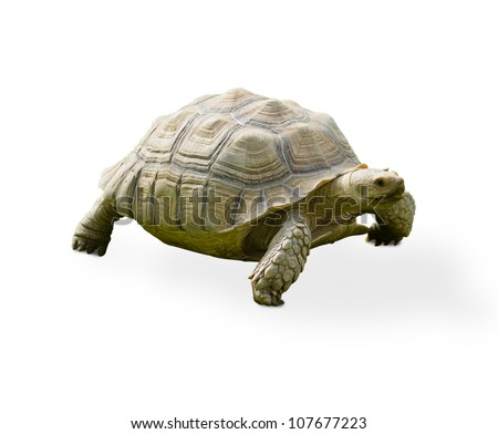 Reptile Turtle On White Background