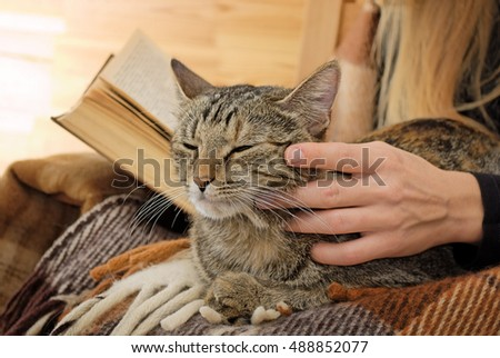 resting cat being gratified
