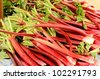 Rhubarb stalks at the Downtown Portland Oregon farmers market in Park Blocks - stock photo