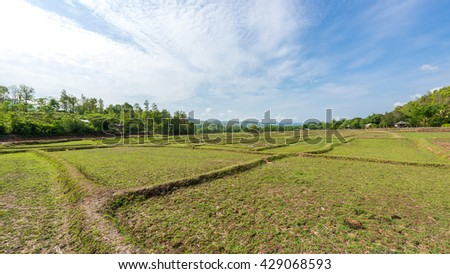 Rice Fields before farming