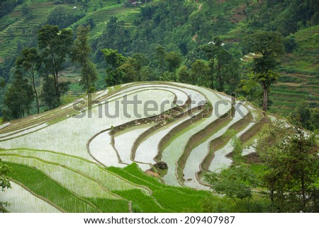 Rice fields on terraced of Hoang Su Phi, Ha Giang, Vietnam. Rice fields prepare the harvest at Northwest Vietnam