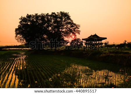 Rice paddies and sunset