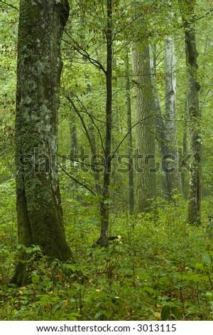 Coniferous Forest Natural Renewable Resources