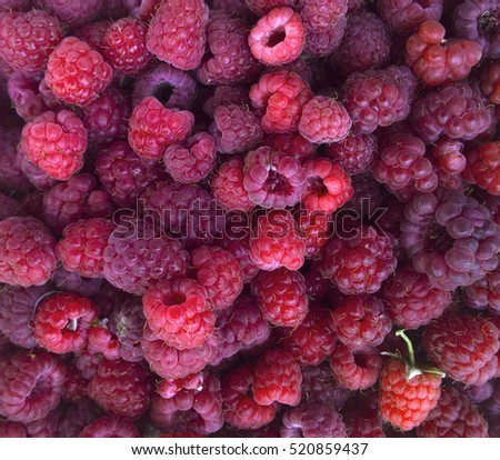 Ripe raspberry, rich harvest.
