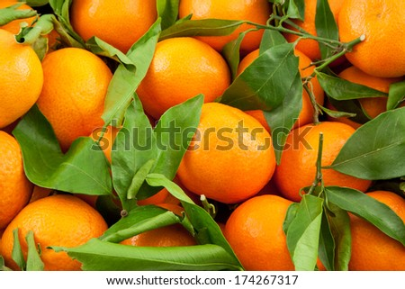 ripe tangerines with leaves as a background