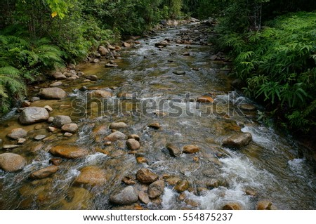 River flowing through the green forest