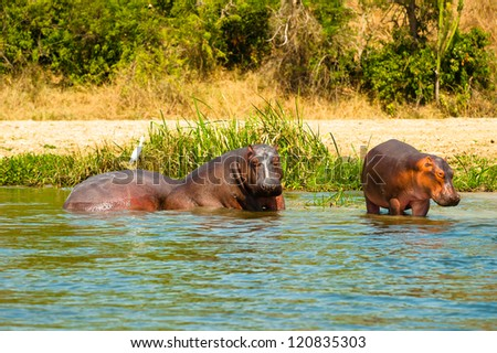 River with the hippopotamus in it,Sight from Africa