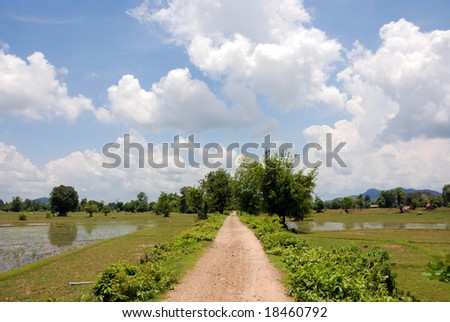 road between rice paddies