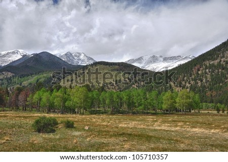 Rocky Mountain Meadow Scene