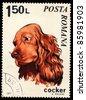 ROMANIA - CIRCA 1971: A stamp printed in Romania shows Cocker spaniel, circa 1971 - stock photo